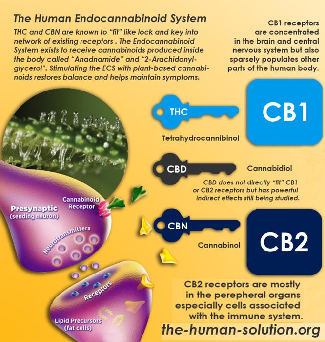 HumanEndoSystem